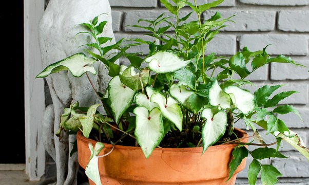 Tips for Successful Container Gardening