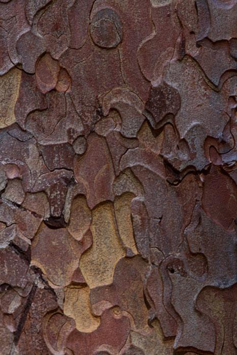 Puzzle-bark