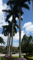 Royal Palm View from the Driveway
