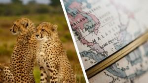 cheetahs on left, old globe on right