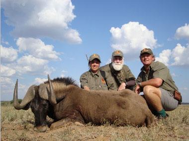 Donna - Black Wildebeest 1
