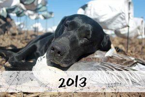 2013 snow goose hunt photos