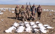 Snow geese migrated big time this day.