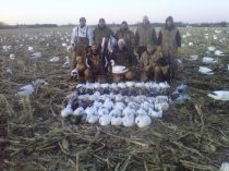 You will never out guess the spring snow goose migration. The geese were very late arriving to Missouri in 2010. There were some birds but in very small numbers so we cancelled a couple days of hunts. With nothing better to do the Up North Outdoor guided decided to hunt one of these small pockets we had found about 3 hours from Mound City. We arrive to that area just about day break and it was very apparent that a large number of geese had moved into the area overnight. We gained access to a field and set the snow goose spread for an afternoon hunt. We shot 53 snow geese as birds poured from the south all afternoon. That evening I was back on the phone telling hunters we were back in business. We had a very successful last week of February and it turned out to be the best hunting we had in 2010.