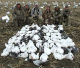 Sullivan party started where they left off on March 11 with 88 more snow geese on March 12.