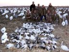 Jagger party snow goose hunt Feb 24, 2006. They tried hard but were one shy of cracking the 100 bird mark... 99 is still pretty good!