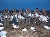 Success in the snow goose decoys