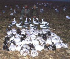 Here is the second day Damian and I hunted together over Deadly Decoys™... 62 snow geese.