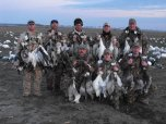 Snow geese harvest over Deadly Decoys™