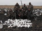 This is by far the luckiest party we have ever hunted. Big day seem to follow these guys where ever they go. Here they shoot 60 snow geese.
