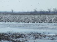 Another view of Squaw Creek when it is stack full of birds.