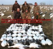 Here in another South Dakota snow goose hunt. The two birds in the front were shot out of the same flock and had consecutive band numbers.