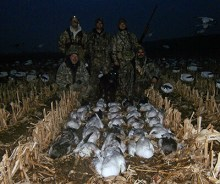 Average Snow Goose Hunt