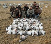 Arkansas rice field snow goose hunt