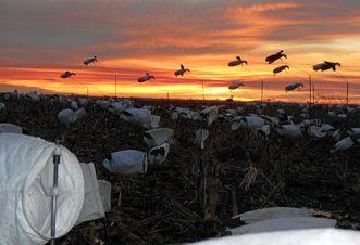 Spring Snow Goose Hunts 2014_053