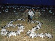 Snow Goose hunting in the corn fields of Missouri.