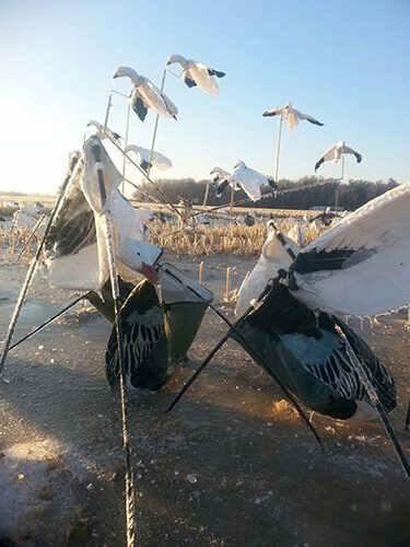 Picture from the big ice storm in Arkansas during the 2014 spring snow goose season.