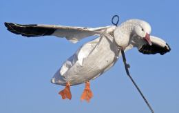 Snow goose flyers are a very effective tool.
