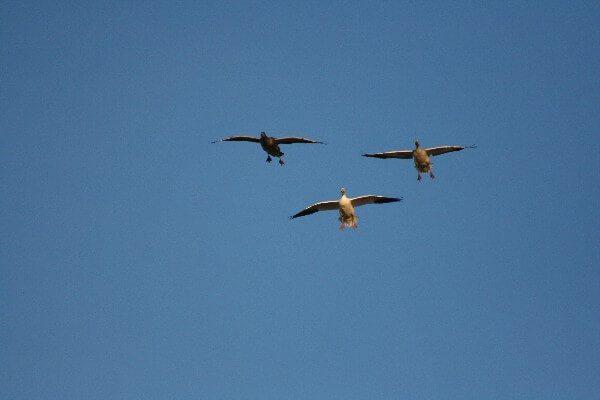 Birds Over Spread 4