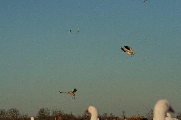 Birds Over Spread 5
