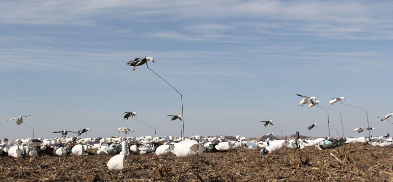 We use a lot of flyers and large decoy spreads to lure the snow geese into gun range.