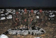 All of our snow goose hunting is done over large decoy spreads with decoying birds.