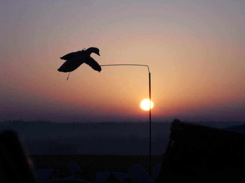 Deadly Decoy™ snow goose flyer with a scenic sunset.