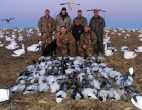 Another big February snow goose hunt.