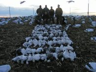 Here is our best day guided hunt for 2012. These hunters harvested 119 snow geese on February 22, 2012.