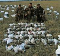 Arkansas snow goose hunting was excellent in 2013.