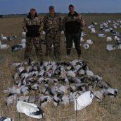Nice Arkansas early Feb snow goose hunt.