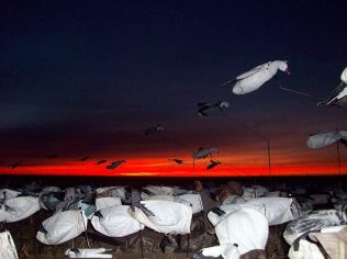 Sun Set over snow goose decoys
