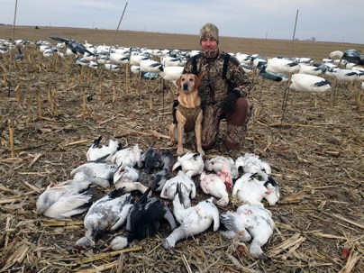 Yellow Lab Snow Goose Hunting