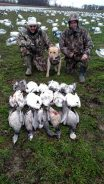 Spring Snow Goose Hunting Www.huntupnorth.com 159