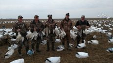 Spring Snow Goose Hunting Www.huntupnorth.com 190