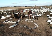 Spring Snow Goose Hunting Www.huntupnorth.com 201
