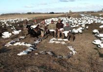Spring Snow Goose Hunting Www.huntupnorth.com 201