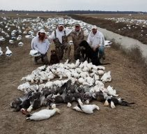 Spring Snow Goose Hunting Www.huntupnorth.com 208
