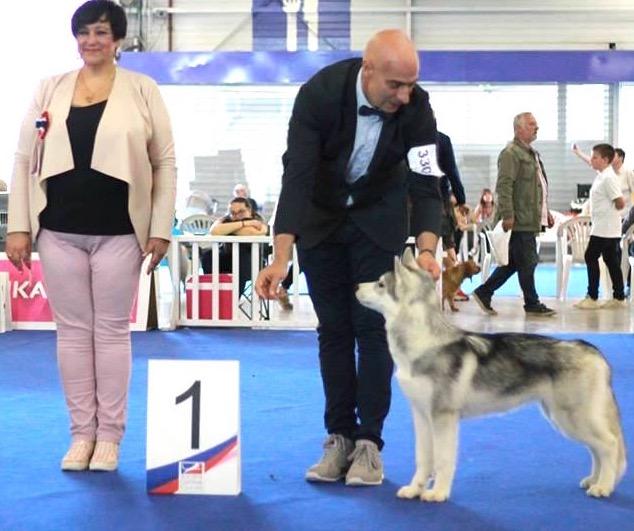 Fils de Trisha Et Mike - 1er classe Puppy aux Championnat de France
