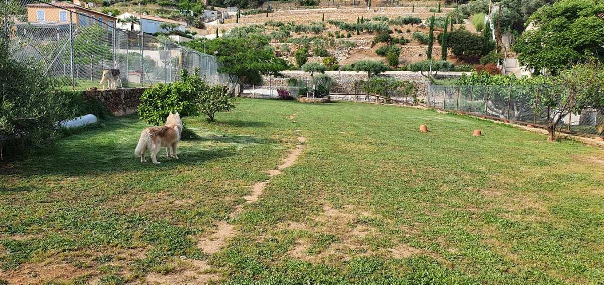 chiot husky région PACA