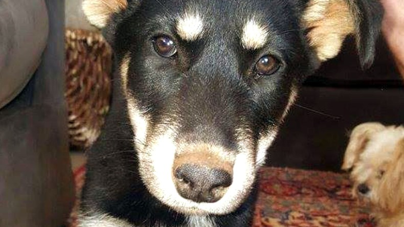 Adopt POCI - Husky Rescue South Africa