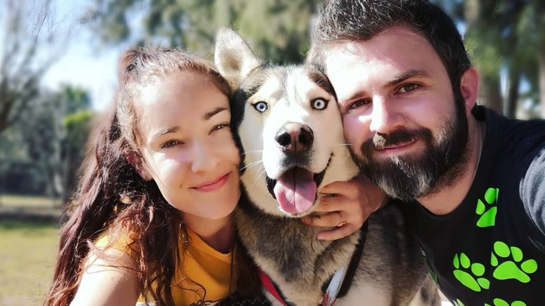 Adopt Arlo Husky Rescue South Africa