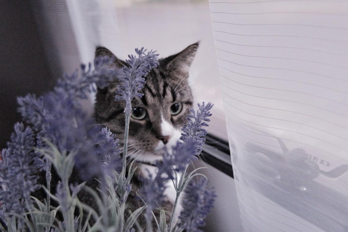 Katt i ett fönster.
