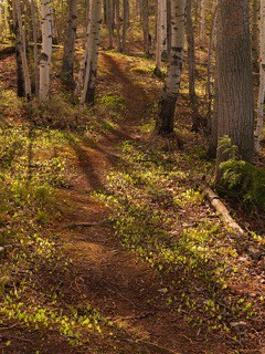 Birch Trail, Maine Huts & Trails, hut2hut