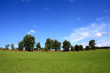 Saftig grüne Felder