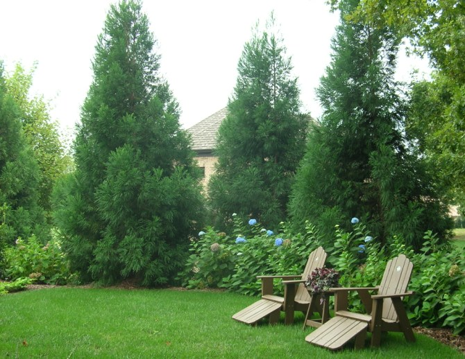 Privacy Plantings on Backyard Landscaping Ideas With Trees id=15655