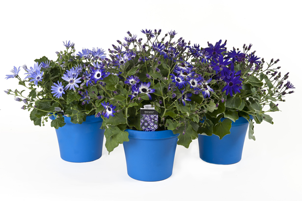10in Senetti Planter