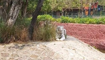 Hyderabad zoo inmates get special care amid COVID-19 pandemic