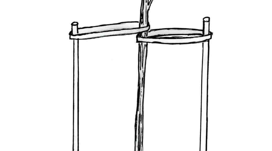 hydrangea planting diagram