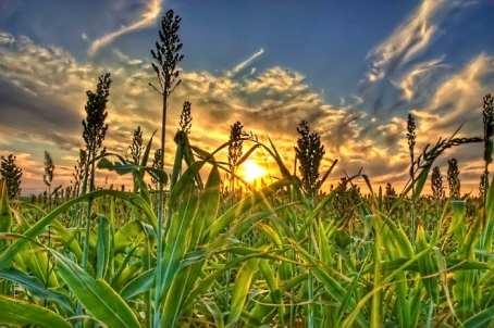 biofuels alternative energy
